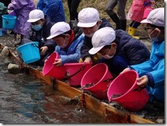 鮭稚魚放流5