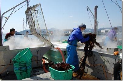 ②大沢漁港のわかめボイル作業13.03.30