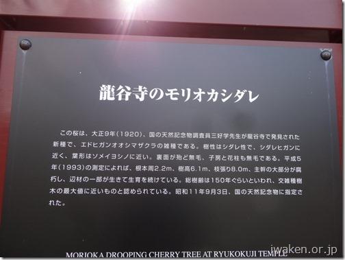 H28.4.21龍谷寺0011
