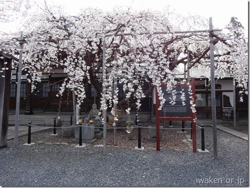 H28.4.21龍谷寺0013