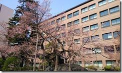 石割桜01