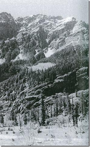 岩盤の山の斜面に成立しているヒマラヤスギの森林。