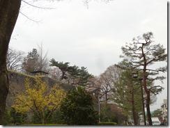 ⑥盛岡城跡公園H27.4.17