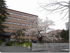 ④石割桜H27.4.17