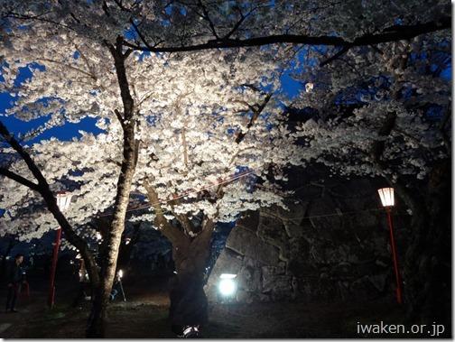 H28.4.21夜桜0012