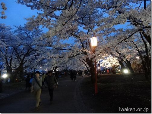 H28.4.21夜桜0011