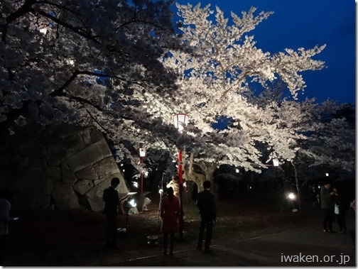 H28.4.21夜桜0014