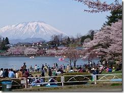 150419桜と花見客と岩手山