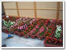 080710花のポケットパークつくり土風館 (7).JPG