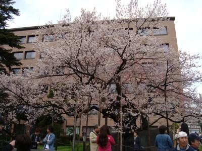 DSC100430石割桜.JPG