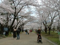 DSCF桜の木の下.JPG