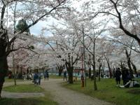 DSCFお花見(公園).JPG