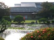 お薬園の池.JPG