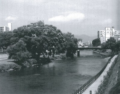 盛岡市の開運橋から見る、北上川河川敷に立つシロヤナギ。
