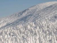 蔵王の樹氷.JPG