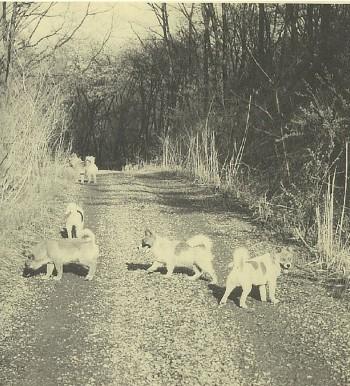 初めは5匹いた犬も、今は2匹だけになってしまいました