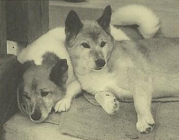 タンポポ(左)とスグリ(右)。今はこの2匹と暮らしています。