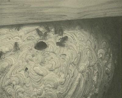 完成した巣を下から見上げたところ