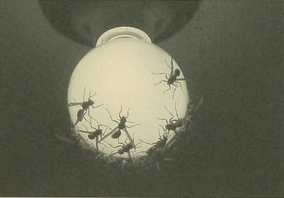 スズメバチに巣を襲われたアシナガバチ
