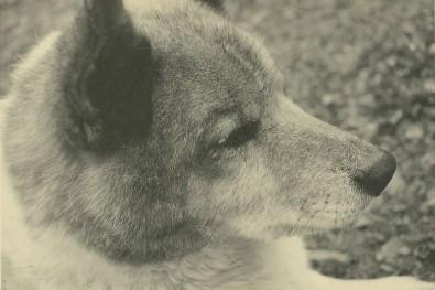 犬の目の縁についたダニ