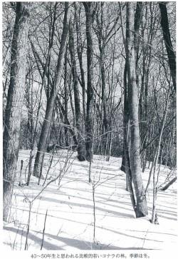40~50年生と思われる比較的若いコナラの林。季節は冬。