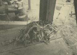 薪を積んだ隙間につくられたネズミの巣。ネズミの巣近くに蛇のヌケガラ。
