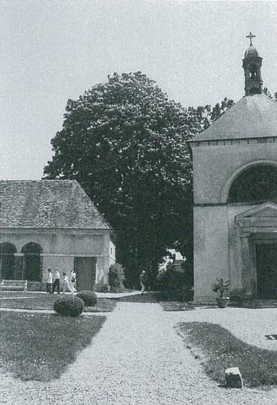 フランスの元貴族の屋敷で見た大きいマロニエ。花が咲いている