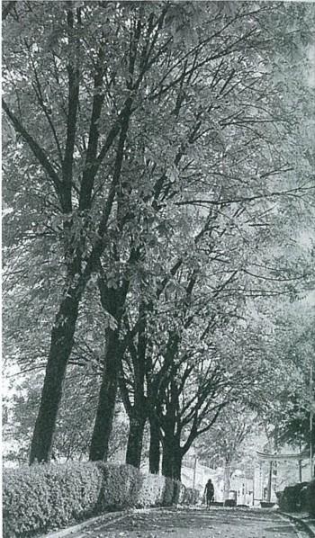 岩手公園のトチノキ並木(2007年10月)
