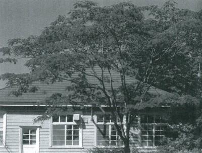 木造の古い家とネムノキ。
