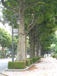 中央通とちの木.JPG