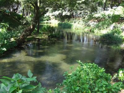 鶴が池.jpg