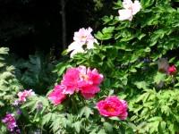 庭園美術館5.JPG