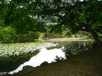 蓮池の木陰.JPG