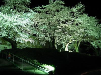 千厩支所の桜のライトアップ