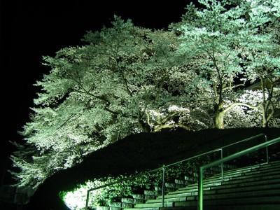 千厩支所 夜桜